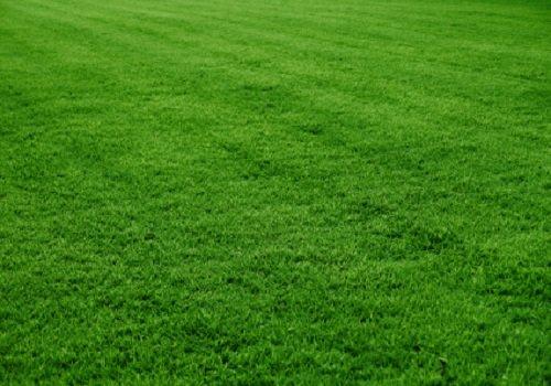 Venda de grama em Minas Gerais MG