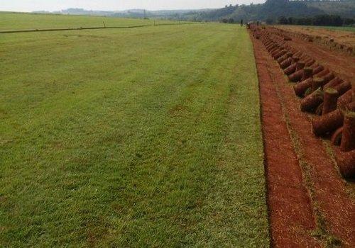 Venda de grama em Rondonia RO