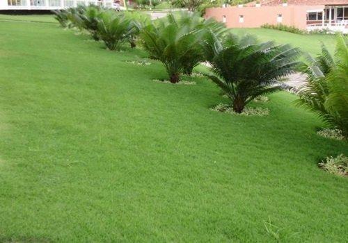 Venda de grama no estado de São Paulo SP
